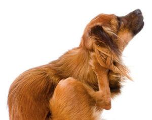 hondkrapt