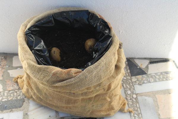 aardappels in zak